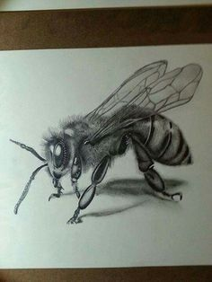 Honey Bee Tattoo, Bumble Bee Tattoo, Pencil Drawing Inspiration, Sketch Inspiration, Garderobe Design, Beautiful Pencil Drawings, Fly Drawing, Mexican Art Tattoos, Bicycle Tattoo
