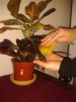 Tak jsem v telce okoukala další bezva radu :<br>Máte doma pokojové květiny… Indoor Plants, Life Hacks, Gardening, Lawn And Garden, Plants, Tips, Balcony, Inside Plants, Lifehacks