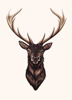 Stag | My first attempt using markers (Finecolour) . Had loa… | Flickr