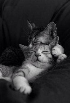 marilda-mm:    ✻ღϠ I love Cats ₡ღ✻(¯`✻´¯)`*.¸.*✻ღϠ₡ღ…