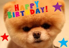 Happy birthday from Boo, the World's Cutest Dog!