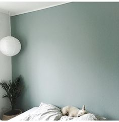 Billedresultat for mint tea flugger (color for small LR wall) Green Wall Color, Living Room Colors, Small Room Bedroom, Bedroom Green, Home, Mint Walls, Bedroom Inspirations, Bedroom Design, Paint Colors For Home