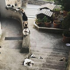 While walking to our place in #Montepertuso, we passed the notorious, local #CatGang. They're #Meow is worse than their bite. #RYM #Vacation #Positano #Cats