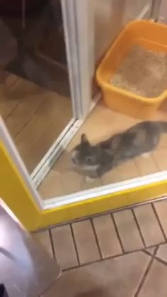 20 Cats That Don't Bother to Ask for Permission From Us 20 gatos que no se molestan en pedirnos permiso Cute Animal Videos, Funny Animal Pictures, Cute Funny Animals, Cute Baby Animals, Animals And Pets, Cute Cats, Funny Cats, Beautiful Cats, Animals Beautiful