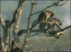 ForGIFs monkeys rude 4gifs