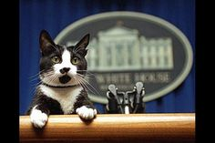 President Bill Clinton (1993-2001) owned two pets, a cat named Socks and a dog named Buddy.