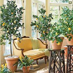Orangery...literally