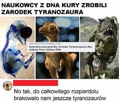 Funny Lyrics, Polish Memes, Weekend Humor, Very Funny Memes, Past Tens, Funny Mems, Quality Memes, Best Memes, Funny Photos
