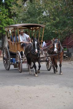 wagon__horses