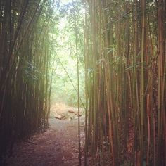 Bamboo forest hiking. #ontheroad #maui #hawaii #nature #travel