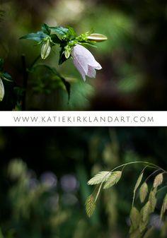 """Korean Bellflower"" and ""Grains"" art prints - Click through to shop"
