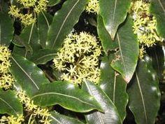 Home page NZ Native Plant Nursery Plant Nursery, Native Plants, Nativity, Plant Leaves, Vivarium, The Nativity, Birth, Green Houses