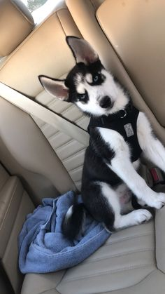 Cute Husky Puppies, Husky Puppy, Cute Dogs, Dogs And Puppies, Malamute Husky, Dog Mixes, Dog Mom, Cute Animals, Pets