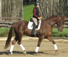 Forte | Dressage Horses For Sale | DressageMarket.com