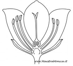 Ppt Design, Botany, Pop Up, 3, Montessori, Home, Science, Woods, Tecnologia