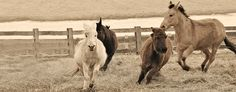 The Donkey Sanctuary of Canada is a home for donkeys, mules and hinnies who have been neglected or abused. Unusual Homes, The Donkey, Zoos, Go Hiking, Donkeys, Day Trips, Animal Kingdom, Summer Fun, Ontario