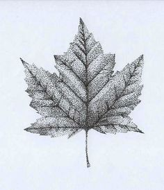 Stipple Maple Leaf | by Briony Knowles