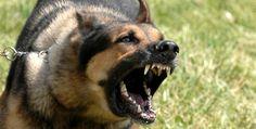 Dôvodov prečo psy útočia na ostatné psy môže byť hneď niekoľko. Ak chceš na tomto probléme zapracovať, musíš v prvom rade zistiť, aký dôvod má práve tvoj pes.
