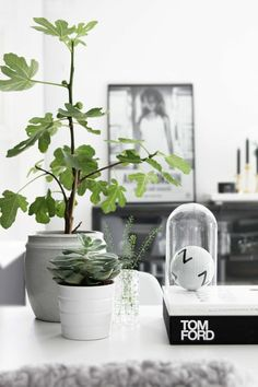 Indoor plants decoration makes your living space more comfortable, breathable, and luxurious. See these 99 ideas on how to display houseplants for inspiration. Indoor Fig Trees, Indoor Plants, Indoor Gardening, Indoor Outdoor, Interior Plants, Interior And Exterior, Plantas Indoor, Deco Nature, Decoration Plante