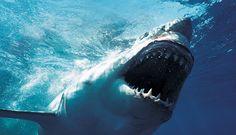 Os 10 Tubarões Mais Perigosos...conheça suas características...
