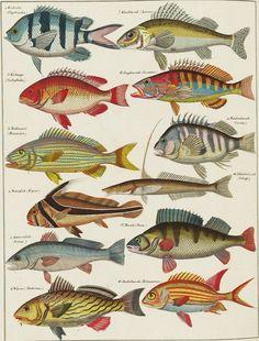Viel mehr Fische im Meer datieren