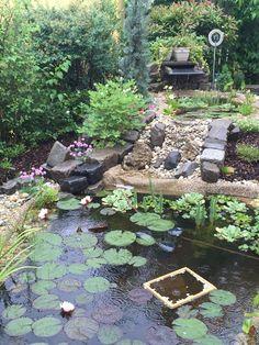 blooming garden pond