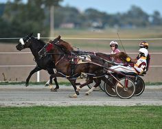 Harness Racing 9/14 #2