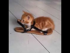 Funny Cat Videos, Funny Cats, Cute Cat Gif, Fox, Facebook, Youtube, Animals, Instagram, Animales