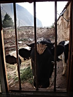 View from my bathroom on the farm near Tarma, Peru. Gave me quite a surprise!