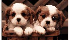 fotos de cachorrinhos - Pesquisa Google