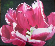 Pink Parrot Tulip painted as a realistic oil painting