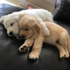 Morning Snuggles #cuteanimals #puppies