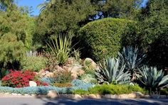 Drought-Tolerant Landscapes - Colorful or Boring?