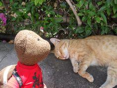 Metody and The Cat from Italian Capri