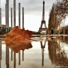 Eiffel Tower reflection in autumn, photo by Joanna Lemanska. Sigh. Even a Paris puddle makes me wistful.