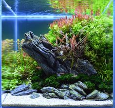 112 best nano tank aquascape images nano tank aquariums shelled rh pinterest com