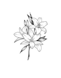 Pen and ink floral lily print Tatto Floral, Lilly Flower Tattoo, Jasmine Flower Tattoos, Water Lily Tattoos, Flower Tattoo Shoulder, Flower Tattoo Hand, Lily Tattoo Design, Floral Tattoo Design, Flower Tattoo Designs