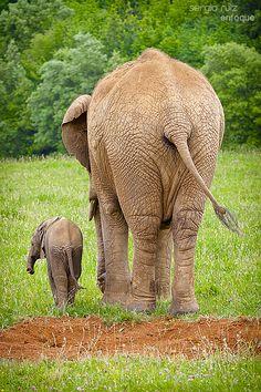Parque de la naturaleza de Cabárceno  | Cantabria | Spain Elephant Pictures, Elephant Love, Wildlife Nature, Gentle Giant, African Elephant, Fauna, Mom And Baby, Natural World, Animals Beautiful