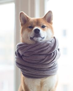When she uses too many Instagram filters but somehow it works. | 21 Times Zelda The Shiba Touched Your Soul