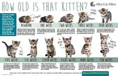 Kitten Season Is Here Kittens! Kitten Season Is Here! Kitten Growth Chart, Feeding Kittens, Feral Kittens, Cats And Kittens, Caring For Kittens, Raising Kittens, Persian Kittens, Newborn Kittens, Kittens