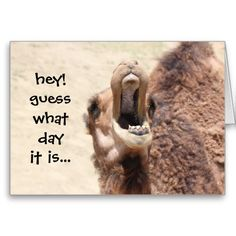 ==>>Big Save on          	Funny Camel Hump Day Birthday Card           	Funny Camel Hump Day Birthday Card Yes I can say you are on right site we just collected best shopping store that haveThis Deals          	Funny Camel Hump Day Birthday Card Here a great deal...Cleck Hot Deals >>> http://www.zazzle.com/funny_camel_hump_day_birthday_card-137676728941591451?rf=238627982471231924&zbar=1&tc=terrest