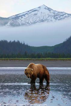 Win a trip to Alaska at Facebook.com/winemarket #discoverthewild #alaska