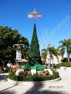 Arbol de navidad - Plaza Publica