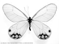 Butterfly Coloring Pages, Butterfly Crafts, Page, Drawings, Pictures, Sheets, Craft, Kids
