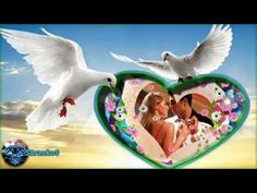 Make It Yourself, Bird, Youtube, Love, Birds, Youtube Movies, Birdwatching
