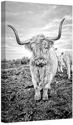 Highland Cow Art, Scottish Highland Cow, Highland Cattle, Cow Pictures, Animal Pictures, Cow Pics, Cow Photos, Farm Animals, Cute Animals