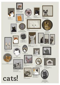 contrasting the qualities of cats and Cats' impressive individuality makes it hard to study their smarts  instilled cats  and dogs with some particular traits and mental skills  really want to compare  and contrast species-wide superiority would do best to turn to the.