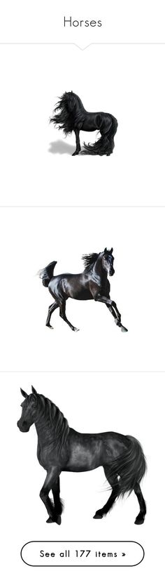 """""""Horses"""" by leaff88 ❤ liked on Polyvore featuring animals, horses, howrse, backgrounds, black, fantasy, filler, effects, fillers and horse"""