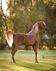 The Arabian Horse - Drinkers of the Wind
