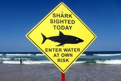 Once dismissed, shark attacks may hit new record in 2016 #iNewsPhoto